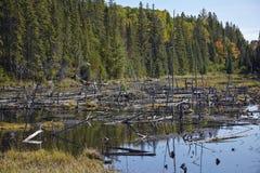 Lös natur med döda träd Royaltyfri Foto