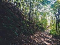 Lös naturgrusväg Arkivbilder