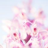 Lös orkidé Arkivbilder