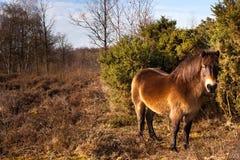 Lös ponny Royaltyfri Bild