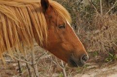 Lös ponny Arkivfoton