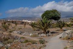Lös promenad på den tenerife ön Arkivbild
