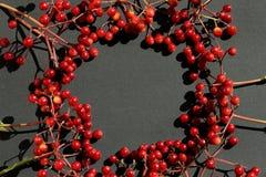 Lös röd frukt på svart bakgrund royaltyfri bild