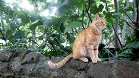 Lös röd katt som sitter på en sten stock video
