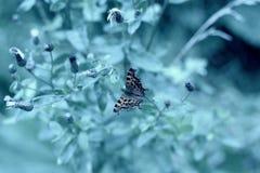 Lös romantisk fjäril på blomman Royaltyfri Foto