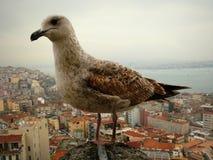 Lös Seagull Royaltyfria Bilder