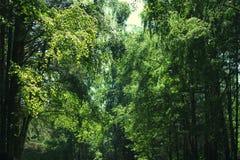 Lös skog för bakgrund, lövverk Arkivbild
