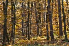 Lös skog med träd i höst Arkivfoto