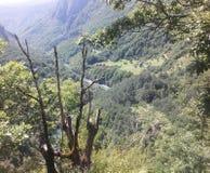 Lös skog och flod Arkivbilder
