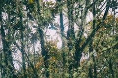 Lös skog på Inca Trail till Mchu Picchu Peru South America arkivfoto