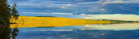Lös skog som är upplyst vid solen på sjön med reflexion royaltyfri fotografi