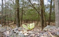 Lös skogblomma Royaltyfria Bilder
