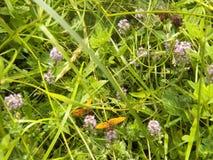 Lös skognatur med fjärilar på Transcarpathia arkivfoto