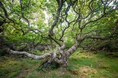 Lös skotsk skogsmark Fotografering för Bildbyråer