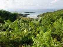 lös strand av överflödande vegetation och naturen arkivfoto