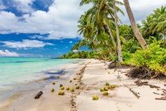 Lös strand med palmträd och kokosnötter på södra sida av Upolu, Royaltyfria Foton