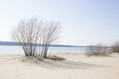 Lös strand med träd och buskar Arkivfoto