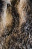 Lös textur av pälsbäverskinnet Royaltyfria Foton