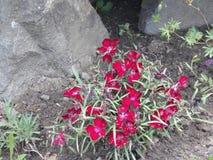 Lös-växande blommor Arkivfoton