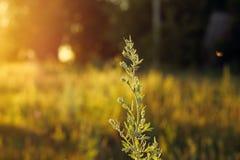 Lös växt i fältet Arkivfoto