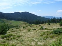 Lös vegetation av bergskogarna Royaltyfri Foto