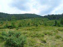 Lös vegetation av bergskogarna Fotografering för Bildbyråer