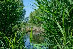Lös vegetation i delta Arkivbild