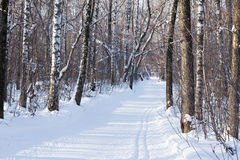 Lös vinterskog på en klar solig dag Royaltyfria Bilder