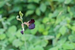 Lös violett blomma royaltyfria foton