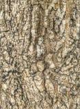 Lös wood yttersida Royaltyfria Bilder