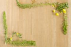 Lösa ängblommor och sidor som är ordnade som ram på träbakgrund Top beskådar Lekmanna- lägenhet Kopiera utrymme för text Arkivbilder
