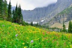 Lösa alpina blommor på glaciärnationalparklandskapet Arkivbild