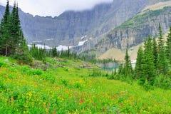 Lösa alpina blommor på glaciärnationalparklandskapet Royaltyfri Fotografi