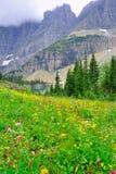 Lösa alpina blommor på glaciärnationalparklandskapet Arkivfoton