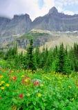 Lösa alpina blommor på glaciärnationalparklandskapet Arkivfoto