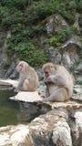 Lösa apor på Jigokudani Arkivbild
