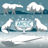 Lösa arktiska djur Royaltyfria Bilder