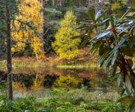 Lösa Autumn Garden royaltyfria foton