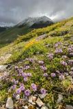 Lösa bergblommor Fotografering för Bildbyråer