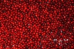 Lösa Berry Cranberry royaltyfri bild