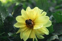 Lösa blommor Arkivfoto