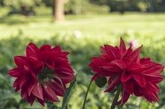 Lösa blommor Royaltyfri Bild