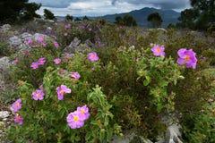 Lösa blommor Arkivbild