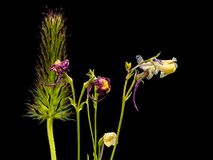 Lösa blommor 11 för TX med mörk bakgrund Royaltyfria Foton