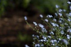 Lösa blommor fjädrar den lugna blåa skogen arkivbild