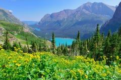 Lösa blommor framme av den Grinnell glaciären och sjön i glaciärnationalpark Royaltyfria Foton