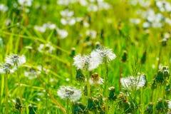 Lösa blommor i en äng i solljus royaltyfri bild
