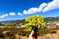 Lösa blommor i Shangri-La Arkivfoton