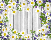 Lösa blommor; kamomillar blåklinter som ram på vitt trä arkivbilder