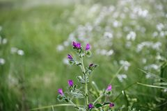 Lösa blommor med defocused bakgrund Fotografering för Bildbyråer